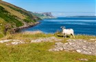 Severni Irsko