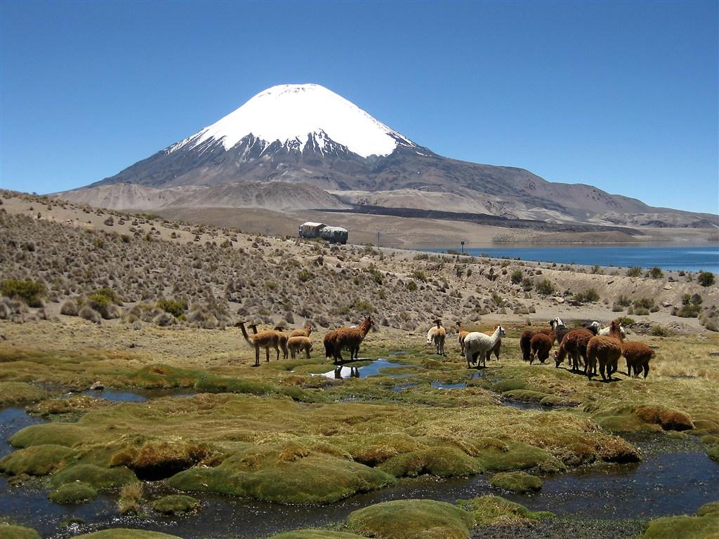 Peru - Chile - Národní park Lauca