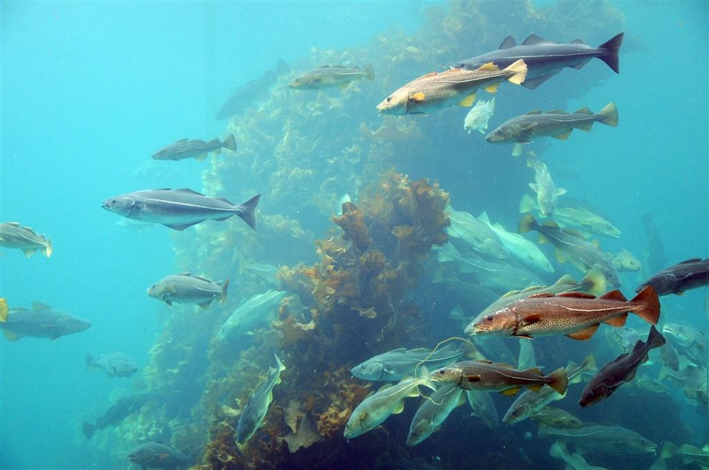 Norsko - mořský park Atlanterhavsparken