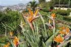 Botanická zahrada Funchal