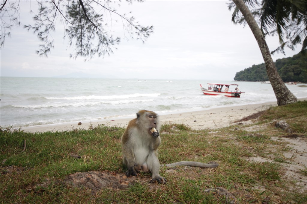 Malajsie - Penang Taman Negra - Monkey beach
