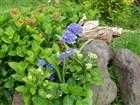 Madeira - Exotické květiny