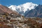 pohoří Langtang dosahující výšky 7 234 m n. m.