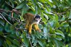 Peru - Amazonie