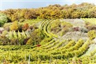 Rakousko - vinice Retz